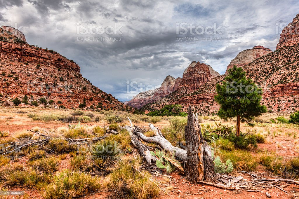 Zion National Park, Utah, USA royalty-free stock photo