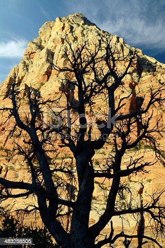 Cattle in green pastures below Rockville Mesa near Zion National Park Utah