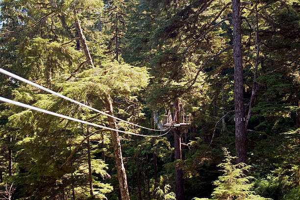 Zip Line Zip line in the trees of Northern BC/Southern Alaska ketchikan stock pictures, royalty-free photos & images