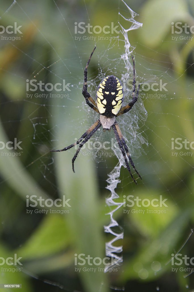 Zipper Spider royalty-free stock photo