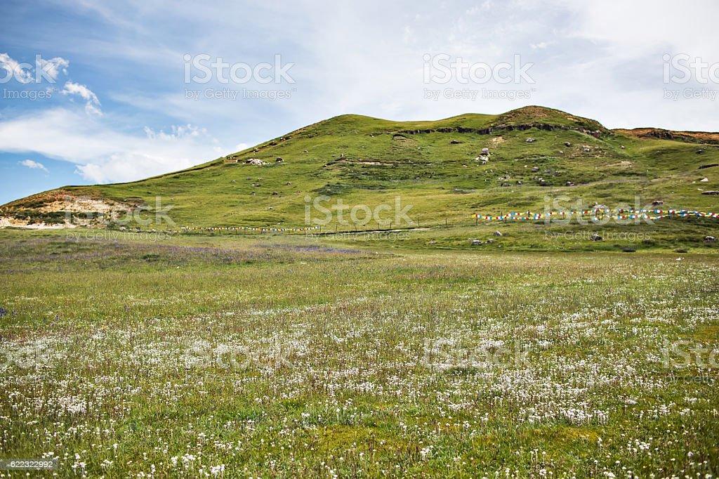 Zoige grassland in Sichuan, China stock photo