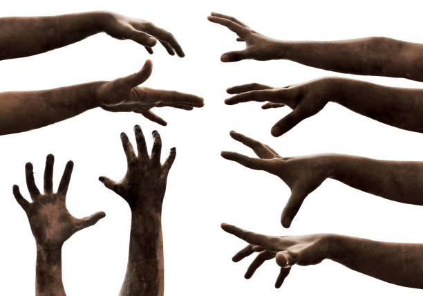 zombie hands on white background - zombie apocalypse stock photos and pictures