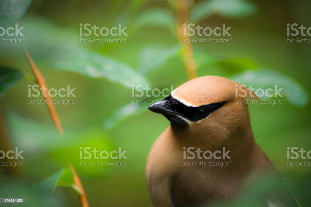 Zoo 15 - Bird stock photo