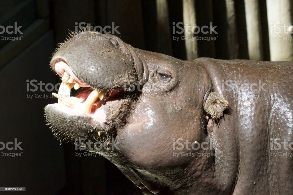 Zoo Animals stock photo