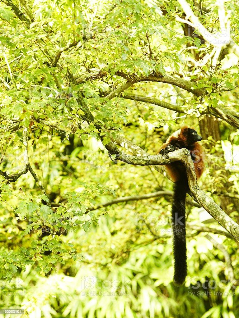 zoo zwierzęta zbiór zdjęć royalty-free
