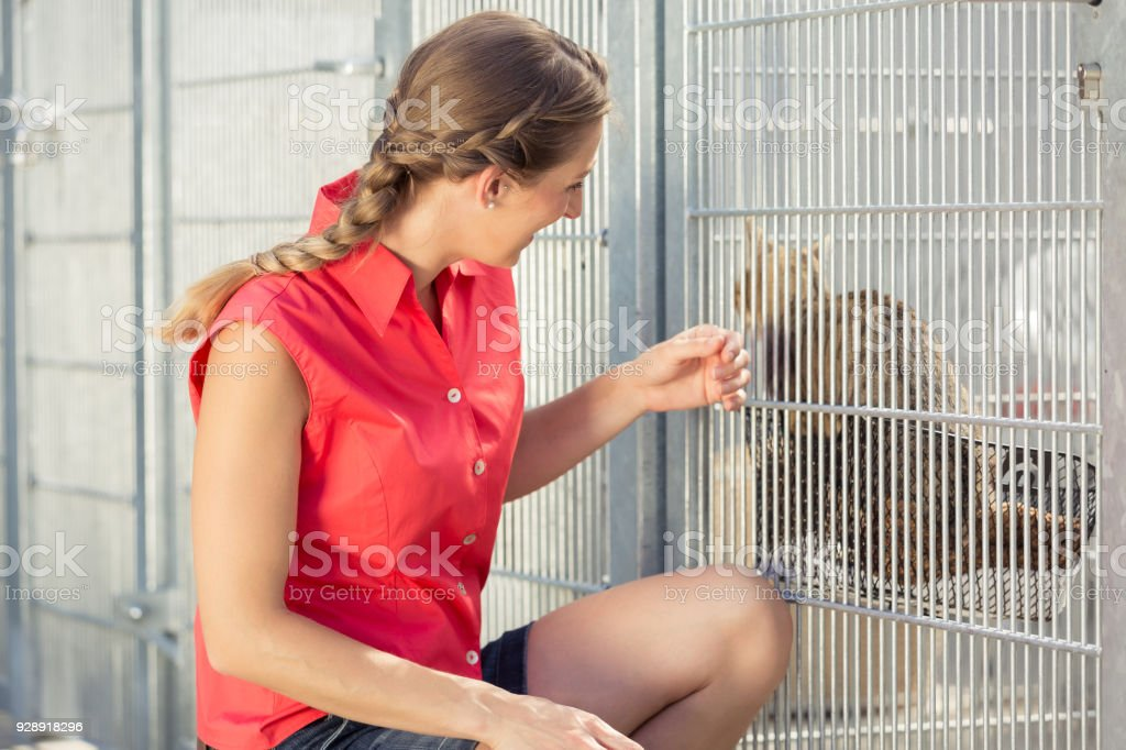 Zookeeper playing with cat in animal shelter stock photo