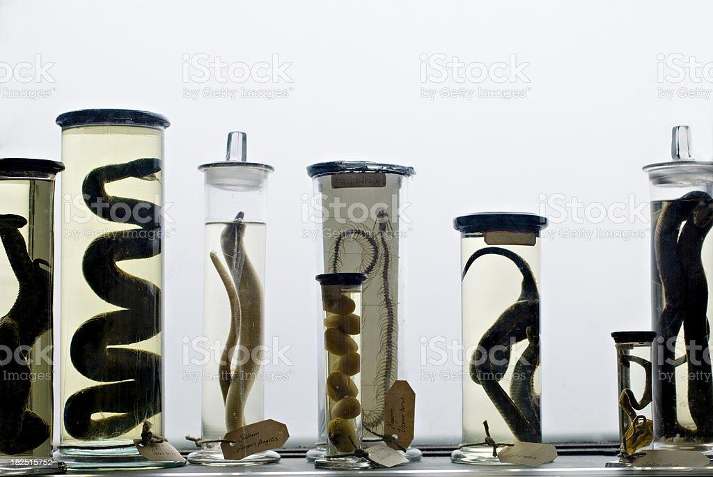 Zoological Specimens Abstract White Background stock photo