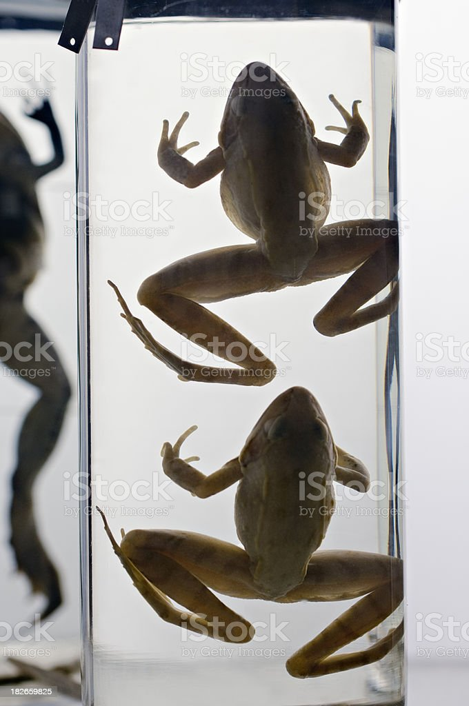 Zoological Specimens in a Jar stock photo