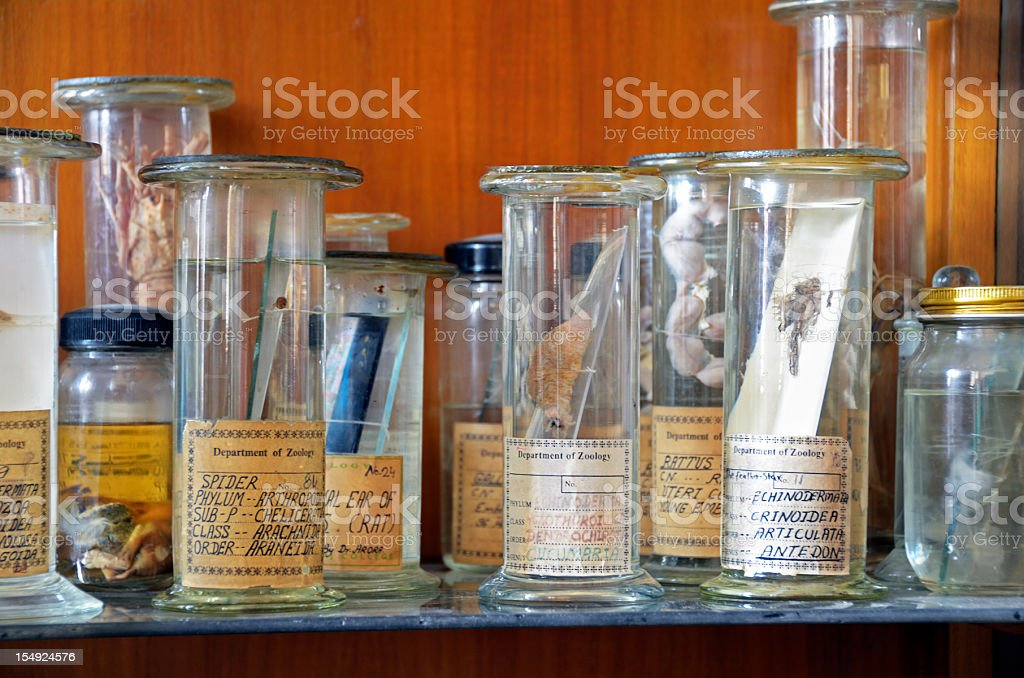 zoology specimens in collection jars stock photo