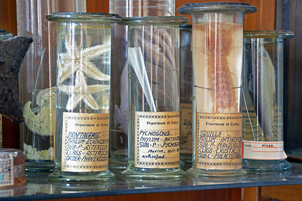 zoology specimens in collection jars Preserved zoology specimens in university collection. Starfish, squilla (shrimp), fish. specimen holder stock pictures, royalty-free photos & images