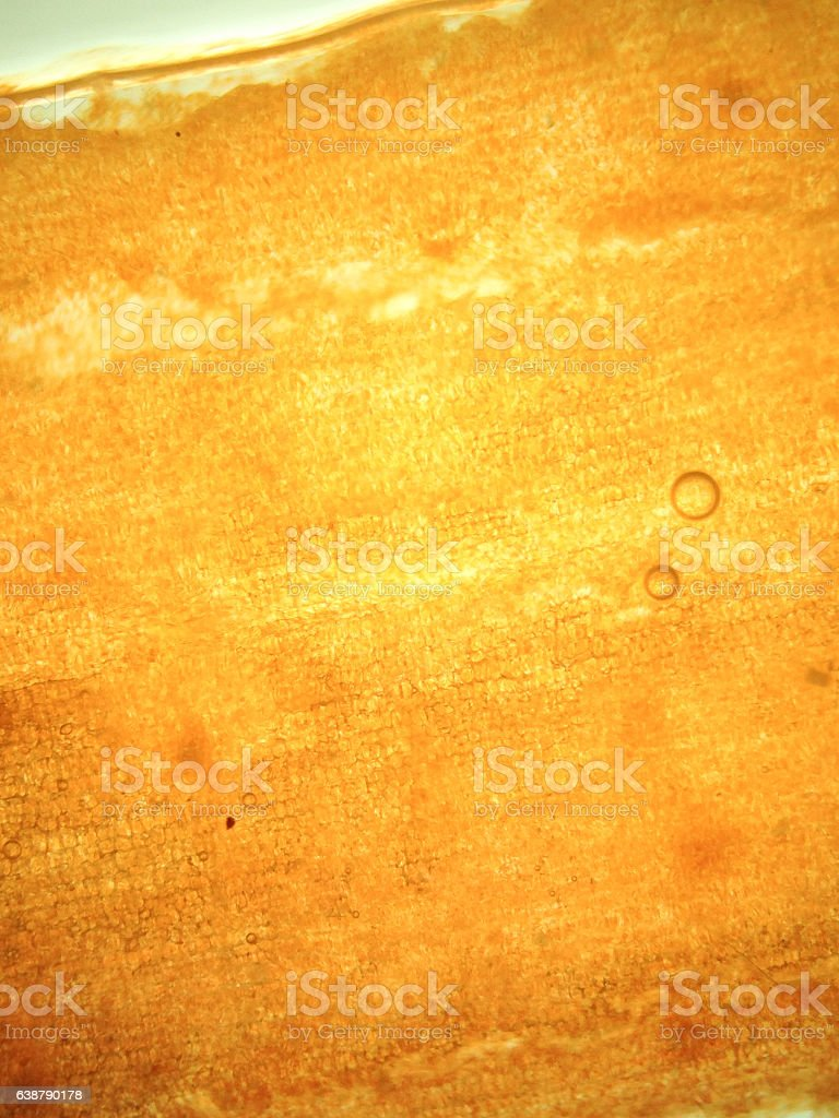 zoom microorganism algae stock photo