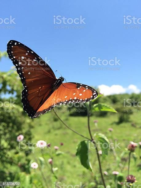 Zoomed in butterfly picture id513228707?b=1&k=6&m=513228707&s=612x612&h=m0d5dwaxpva44zszb2ncs5b8asdlf8nnvlrrpkwis 8=