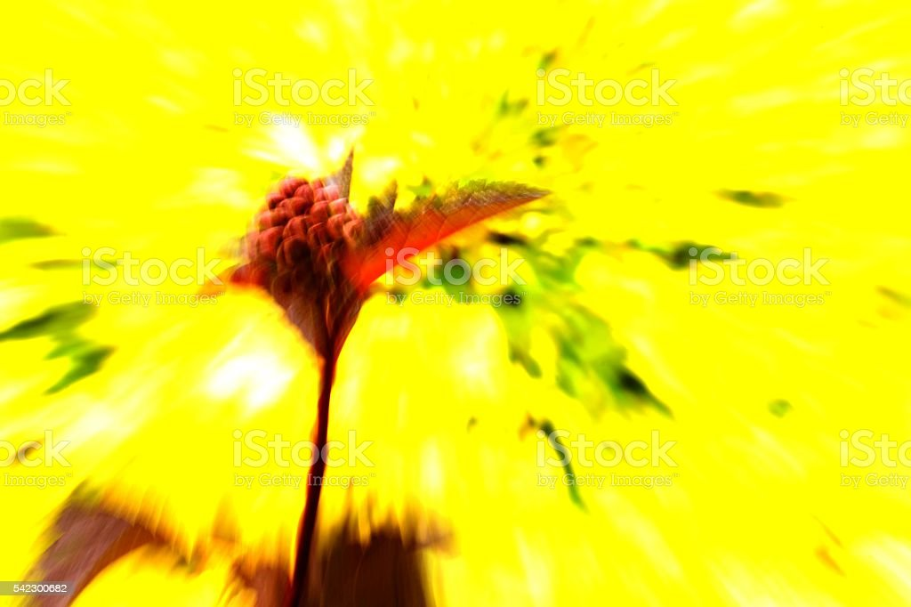 zooming stock photo