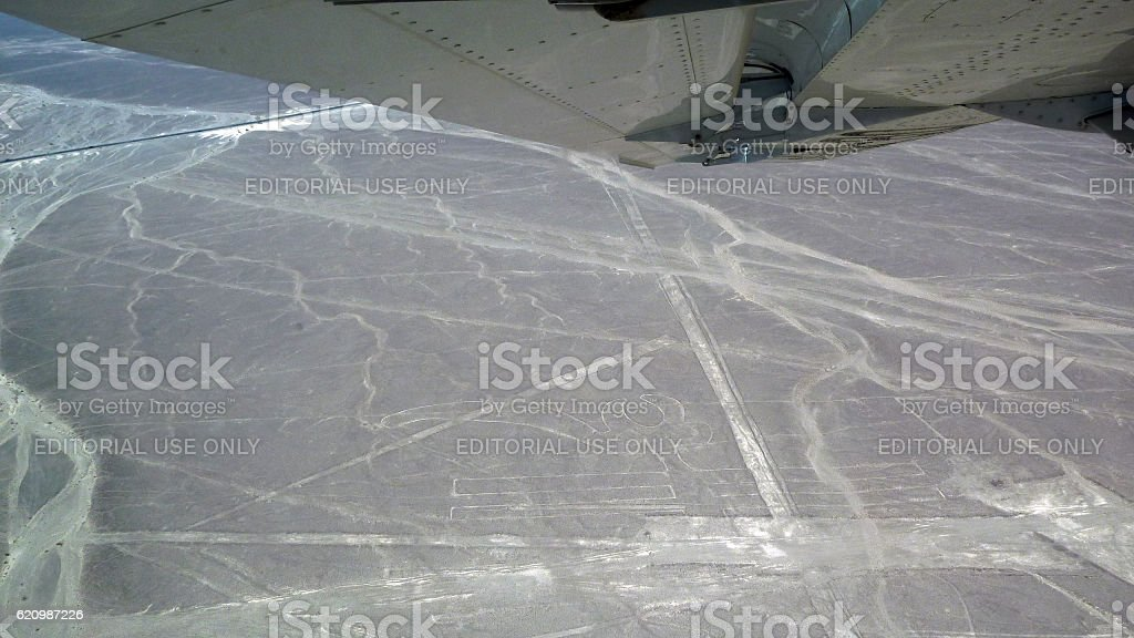 Zoomorphic figure in the Nazca Lines foto royalty-free