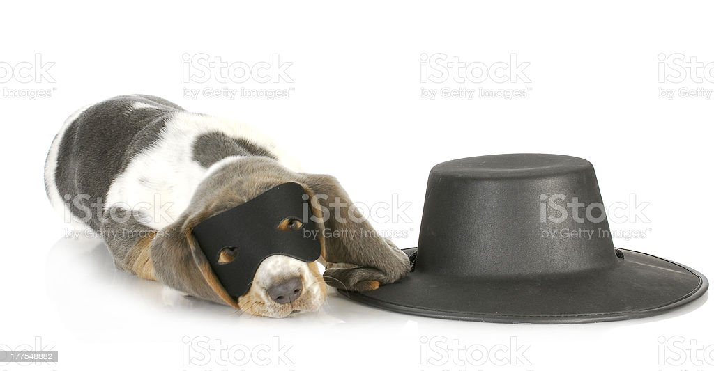 zorro dog stock photo