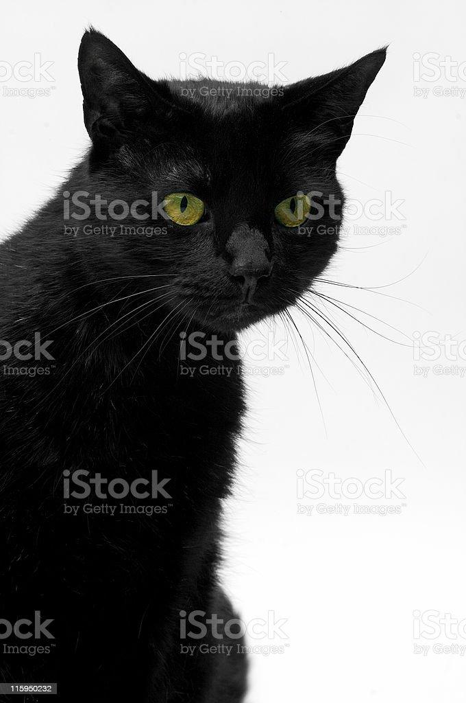Zorro the black cat (01) royalty-free stock photo