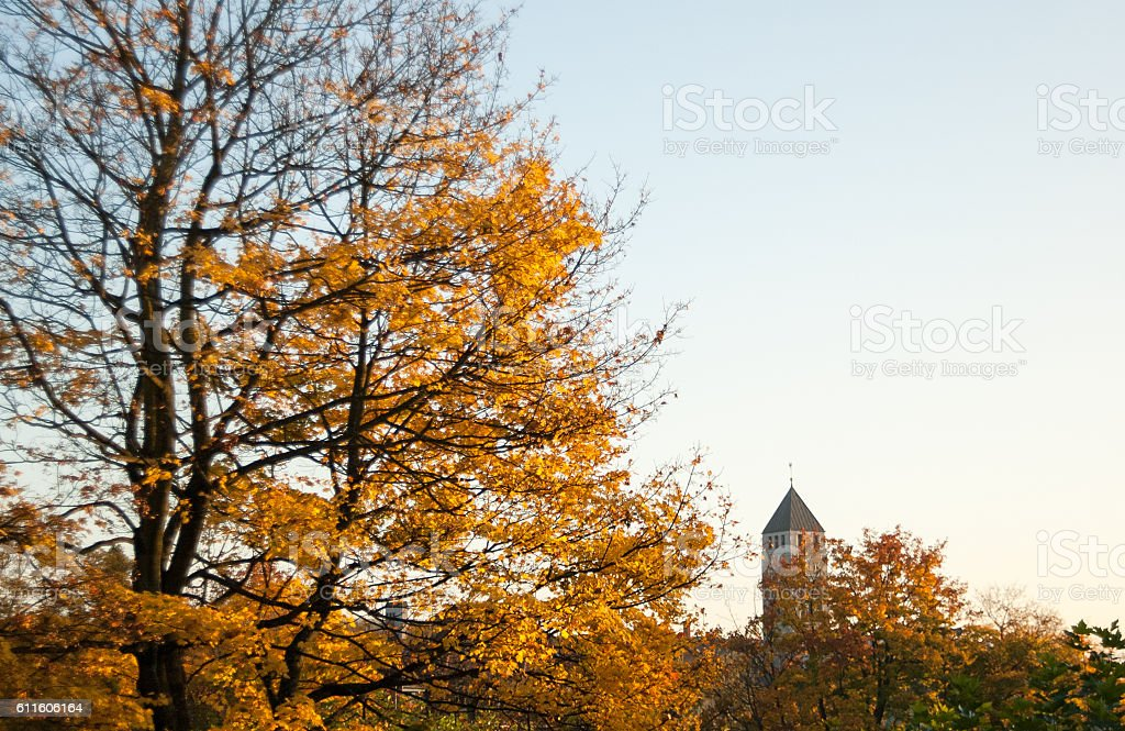 Zurich with Yeallow Leaves in the Evening in Autumn