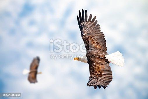 Zwei Adler mit ausgebreiteten Schwingen