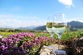 istock Zwei Weißweingläser vor Alpenkulisse, romantisch mit blühendem Blaukissen 956166034