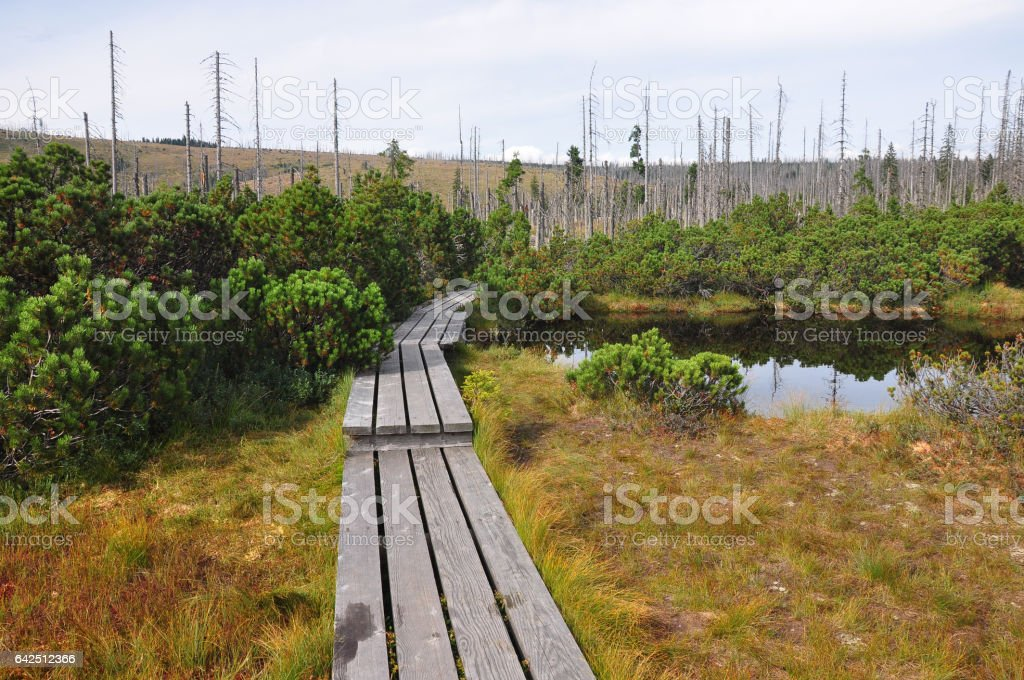 Zwieselter Filz in national park Bavarian Forest stock photo