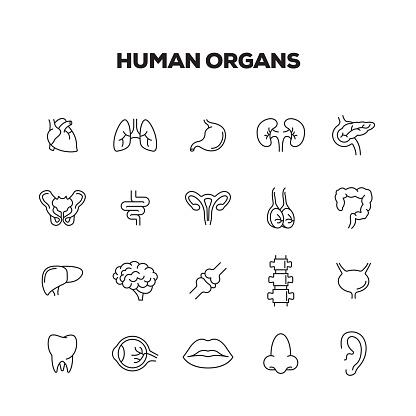 HUMAN ORGANS LINE ICONS SET