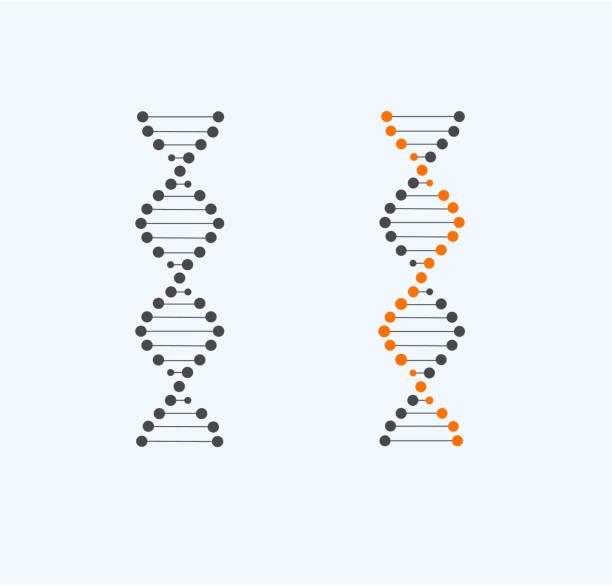 DNA DNA, genetic vector symbol. Science. Medicine. Genetis dna test stock illustrations