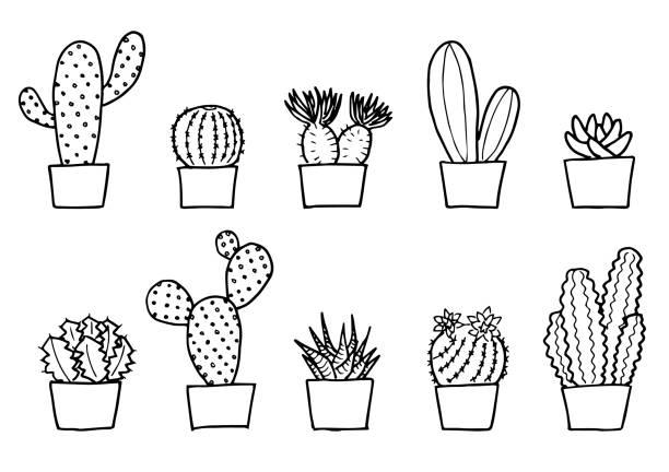 サボテンのイラストセット(モノクロ) サボテンのイラストセット(モノクロ) illustrations and モノクロ stock illustrations