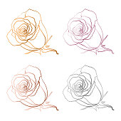 Hand drawing silver, bronze, purple and gold contour of the beautiful rose isolated on white background. Vector illustration.