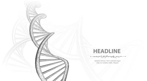 DNA. Abstract 3d polygonal wireframe dna molecule helix spiral on white background. Medical science, genetic biotechnology, chemistry biology, gene cell concept vector illustration or background helix model stock illustrations