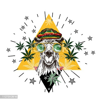Vector image of a camel in green glasses and a rastamana hat.  T shirt design