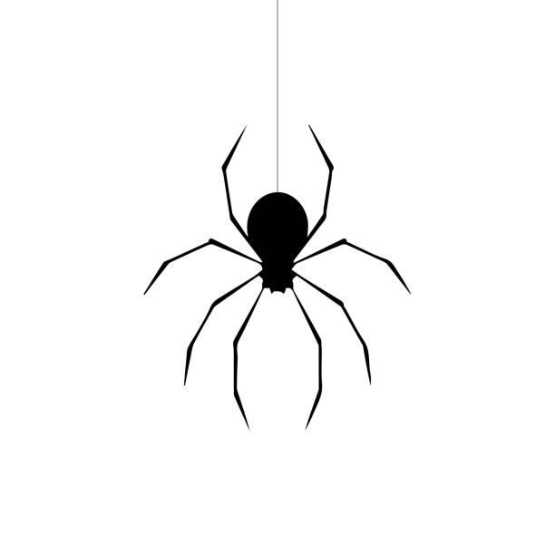 ðŸðµñ‡ð°ñ'ñŒ - tarantula stock illustrations