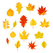 Bright autumn leaves set. Vector illustration isolated on white background. Flat style design.
