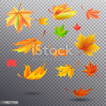Autumn fallen maple leaves of bright orange, sunny yellow and saturated green colors isolated vector illustrations set on transparent background.