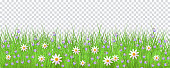 Green meadow grass, daisy chamomile flowers border frame, template on transparent background. Spring summer sale template for retail poster and advertising design wtih text space. Vector illustration
