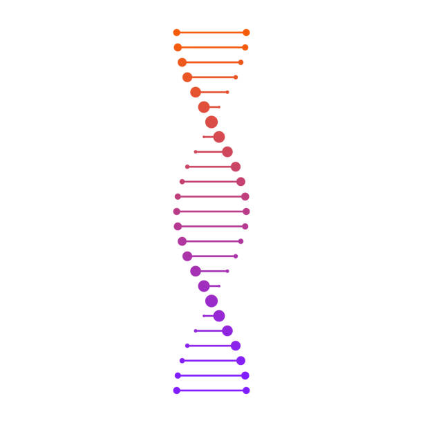 DNA_13 Vector illustration of a DNA chain in the form of a spiral. The concept of medicine. dna stock illustrations
