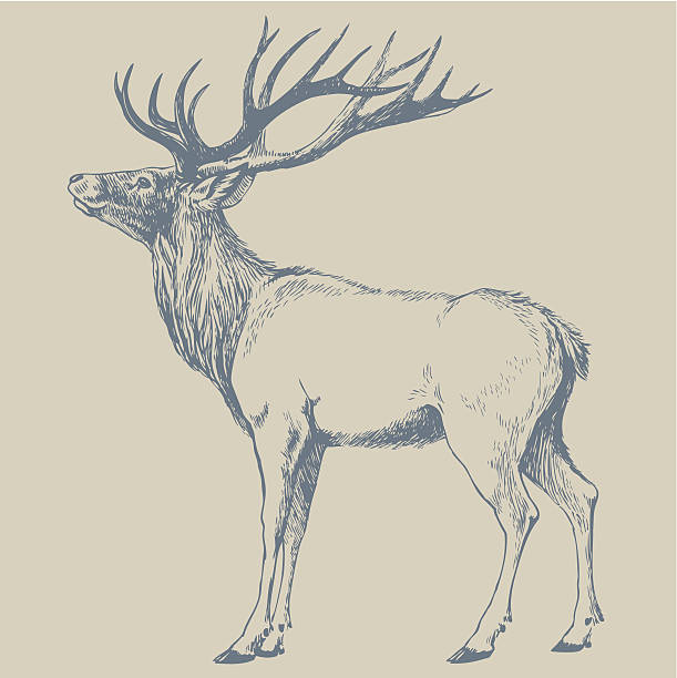 DEER vector art illustration