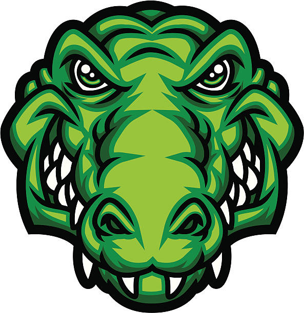 gator head - alligator stock illustrations