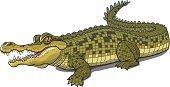 istock CROCODILE 165677952