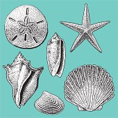 """SEA SHELL COLLECTION. Pen and ink illustrations of various sea shells. Check out my """"Nautical & Beach"""" light box for more."""
