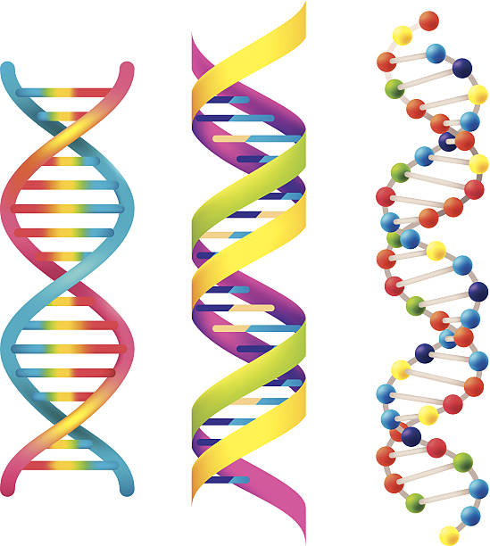 DNA DNA illustration.eps8,ai8,jpg format are available. helix model stock illustrations