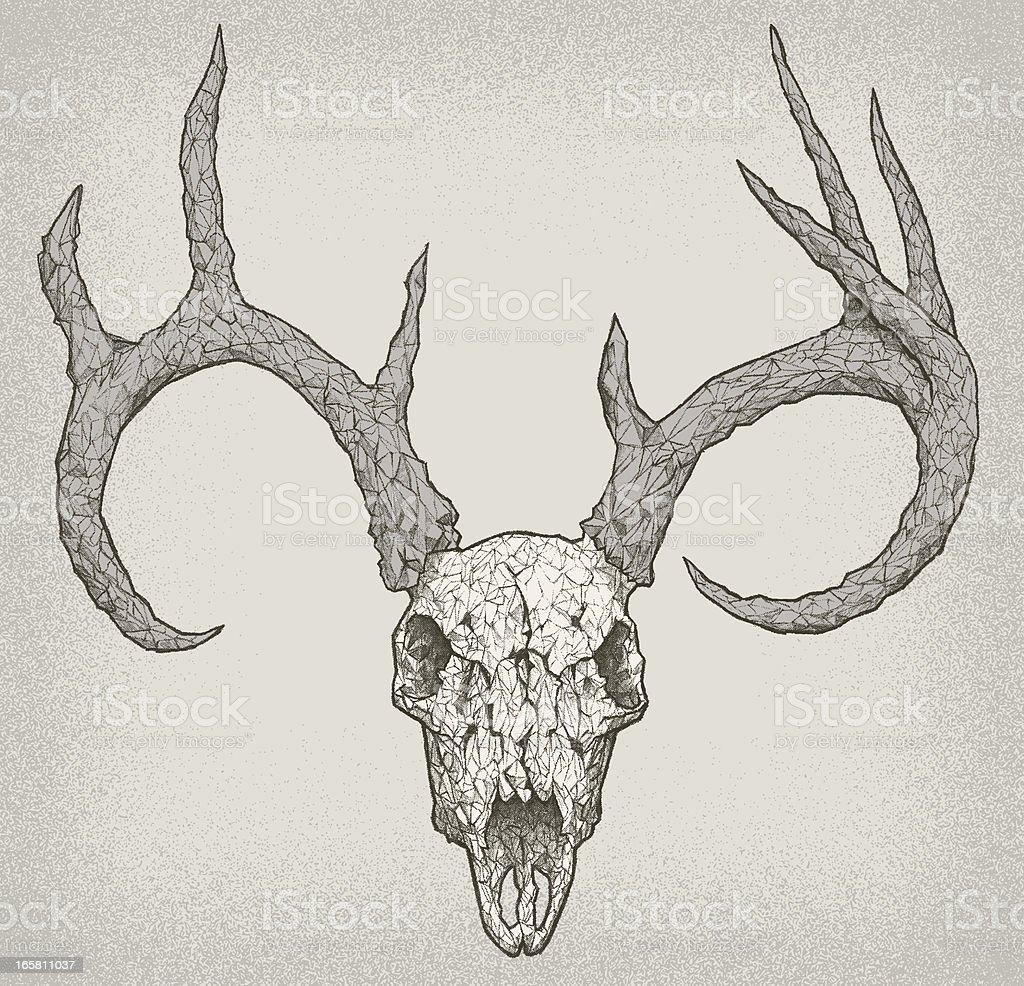 CRACKED DEER SKULL vector art illustration