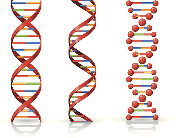 DNA High Resolution JPG,CS6 AI and Illustrator EPS 10 included. Each element is named,grouped and layered separately. Very easy to edit.  helix model stock illustrations
