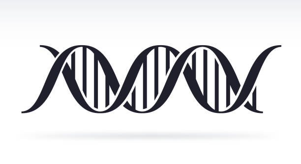 DNA DNA strand silhouette symbol. biological process stock illustrations