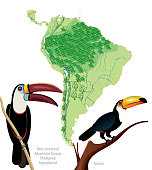 SOUTH AMERICA TOUCAN
