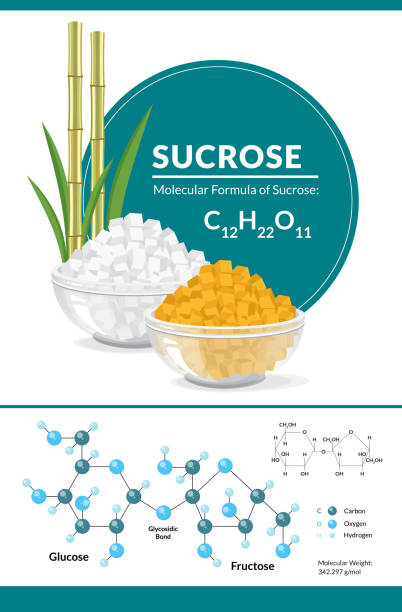 Печать Vector illustration. Structural chemical formula and model of sucrose. White and brown sugar cubes in bowls carbohydrate biological molecule stock illustrations