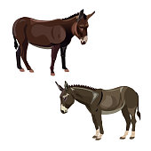 Two donkeys, side view. Vector illustration isolated on the white background