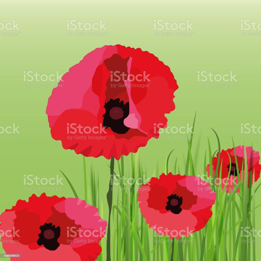 01_Poppy_Flower royalty-free stock vector art