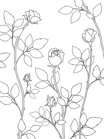 2021-259-vector-nature-02-rose-outline-black-background-white-3500x4667px