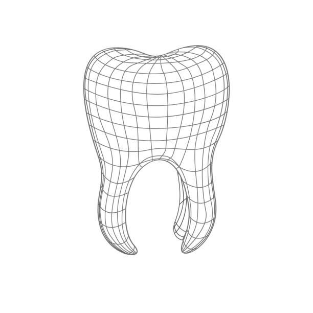 bildbanksillustrationer, clip art samt tecknat material och ikoner med 3d polygonal tand isolerad på vitt. - molar