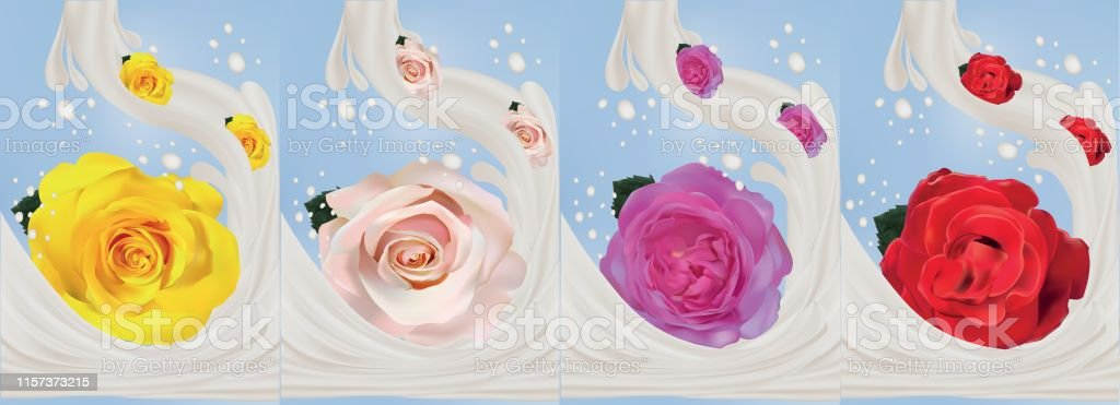3d realistic rose with milk splashes close-up. Beautiful roses...